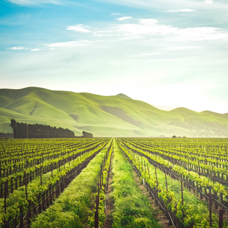 Cool Climate Wines Canberra